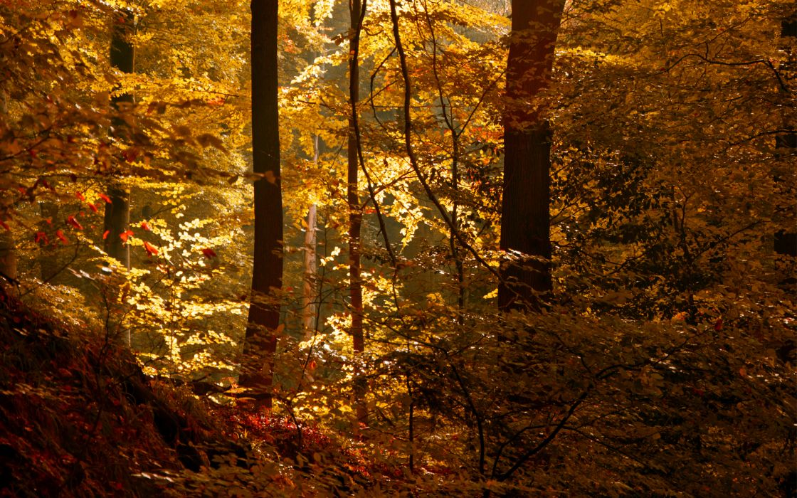 leaves nature landscapes trees forest woods autumn fall light wallpaper