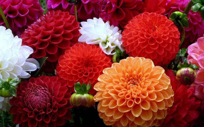 nature flowers bouquet color petals wallpaper