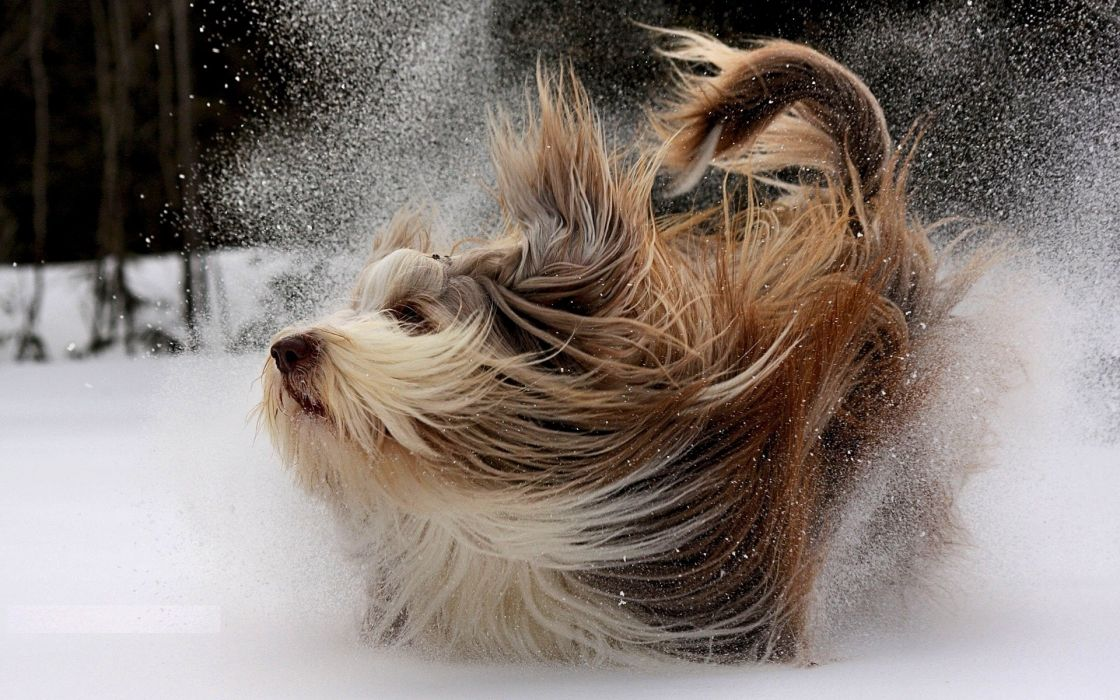drops flakes winter snow animals dogs canine wallpaper