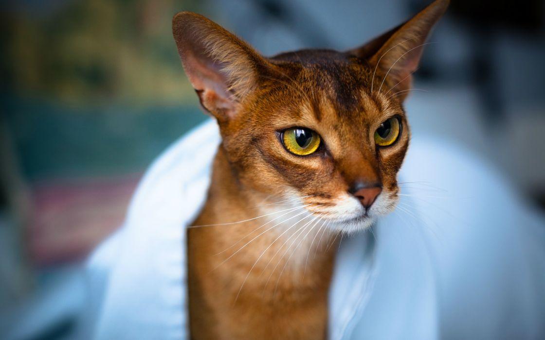 eyes face animals felines cats reflection wallpaper