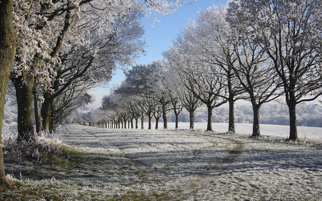 frost winter snow nature landscapes fields trees wallpaper