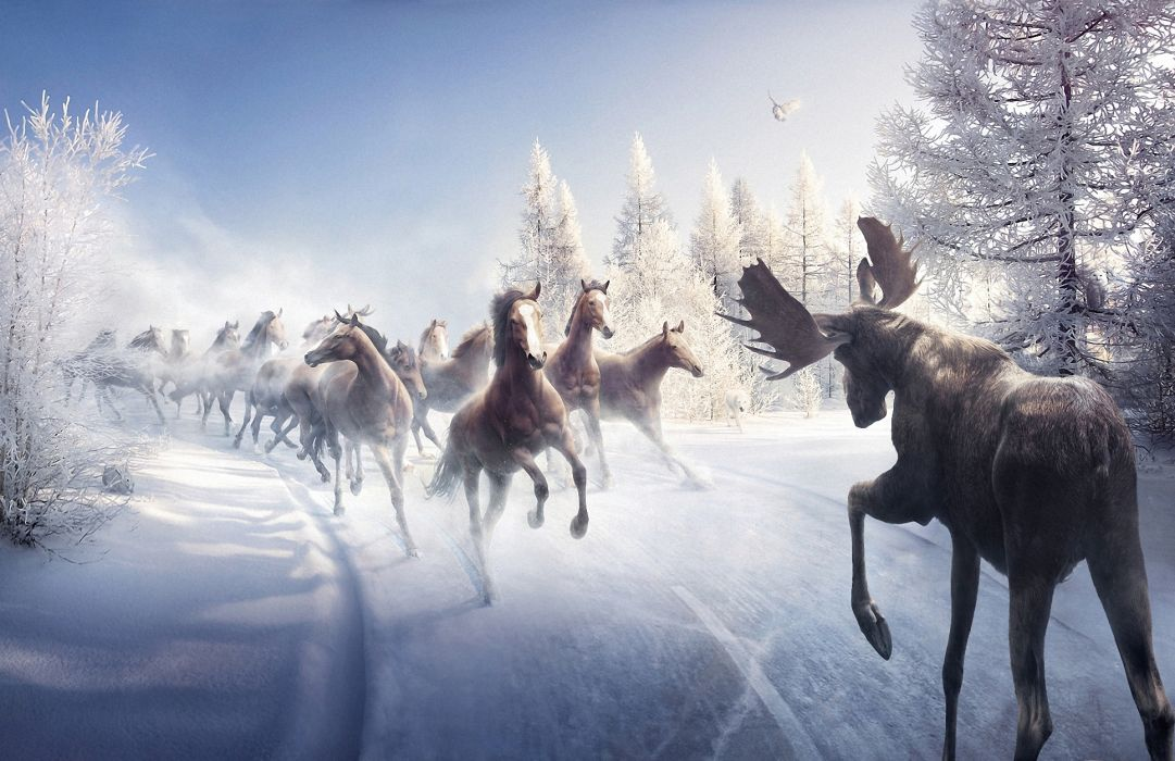 battle animals art paintings nature landscapes winter snow trees horses moose wallpaper