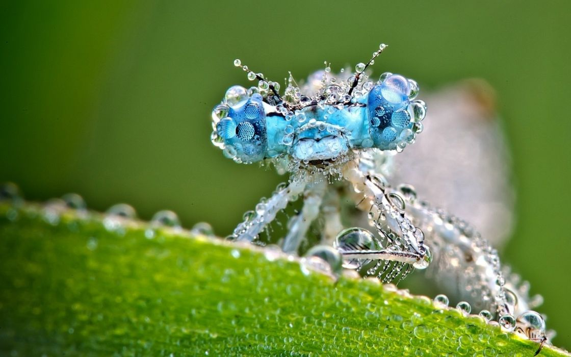 insects dragonflies macro drops eyes water leaves close-up wallpaper