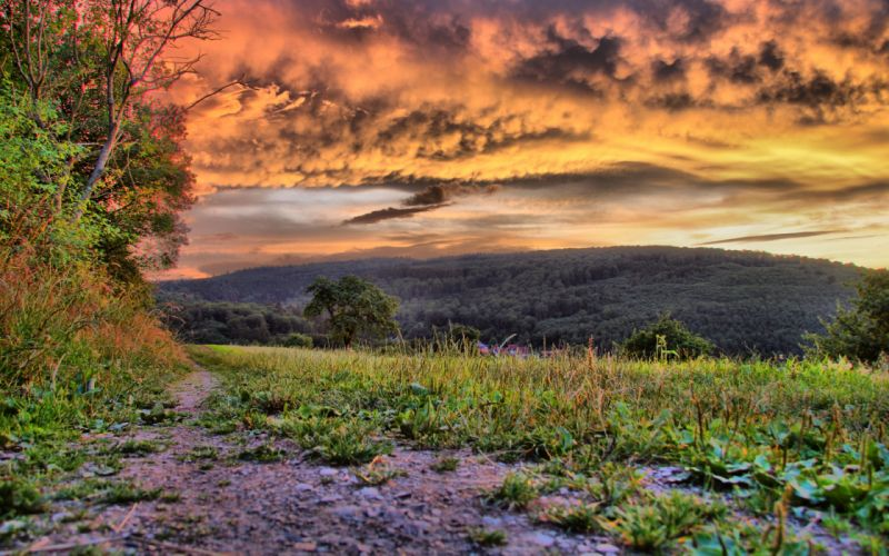 grass nature landscapes fields sky clouds roads trail path trees sunset sunrise hdr wallpaper