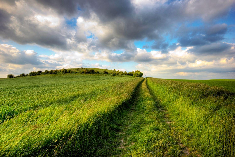 Camino entre la vegetación