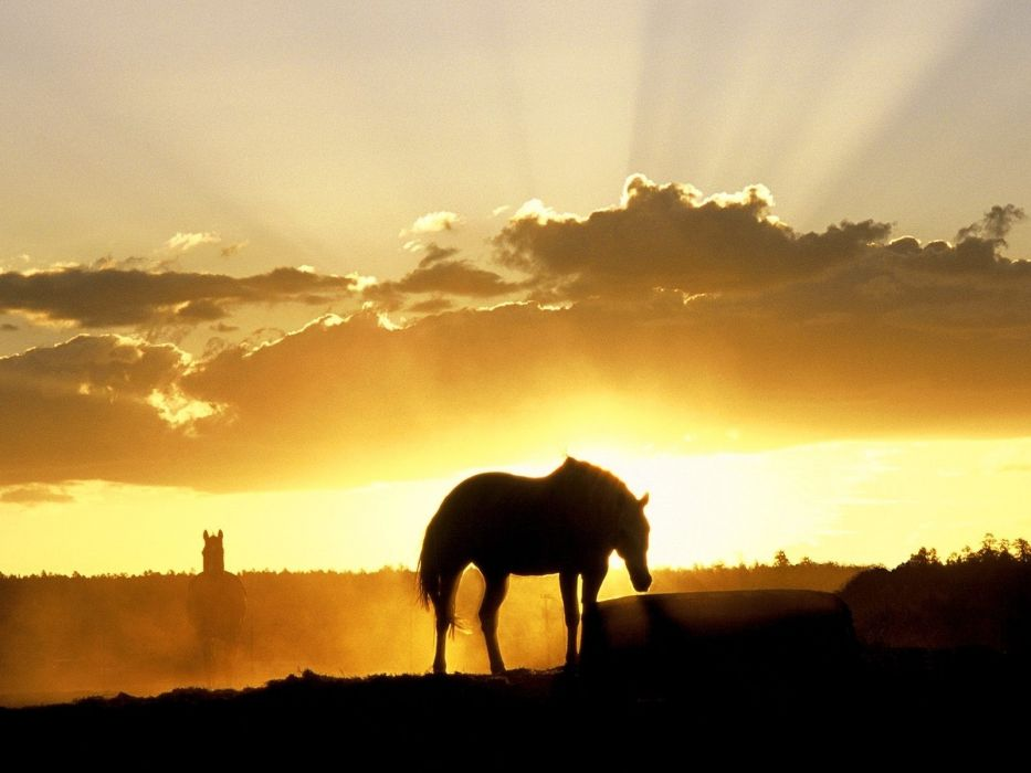 silhouette animals horses landscapes sunset sunrise sky clouds beams rays wallpaper