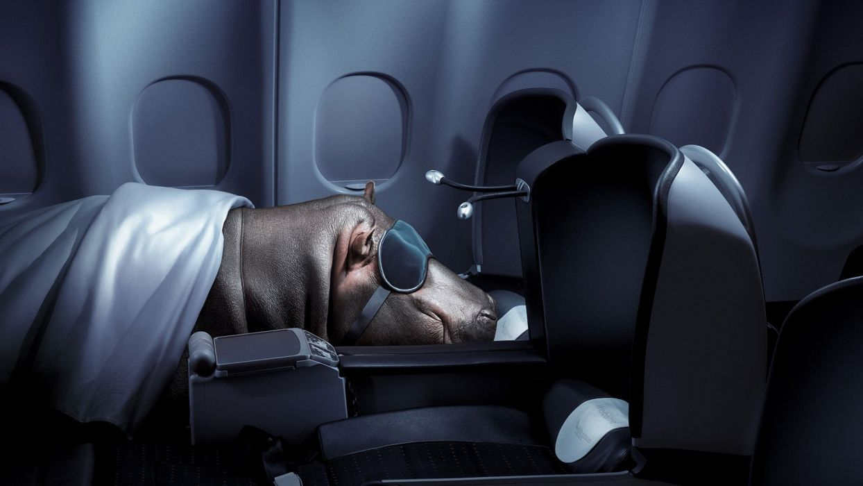 situation humor funny aircrafts animals hippo jets airplane wallpaper