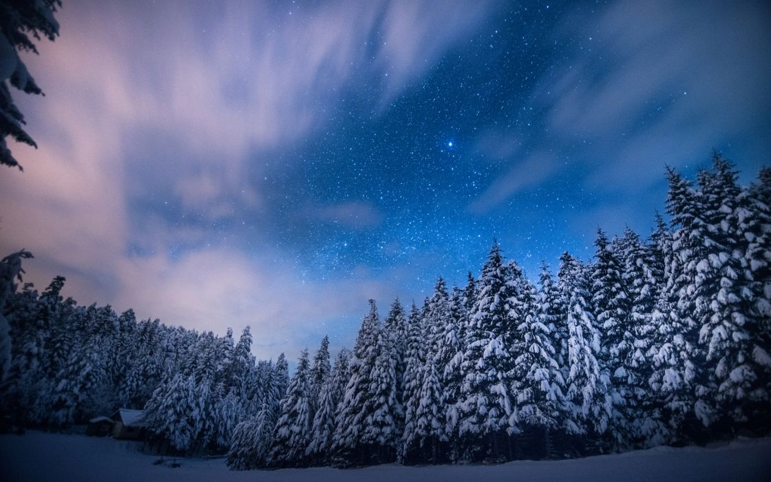Trees Stars Night Snow Winter Forest Sky Clouds Landscapes Wallpaper