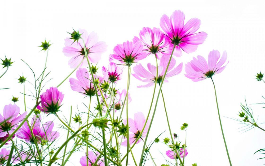 vector summer flowers petals plants wallpaper