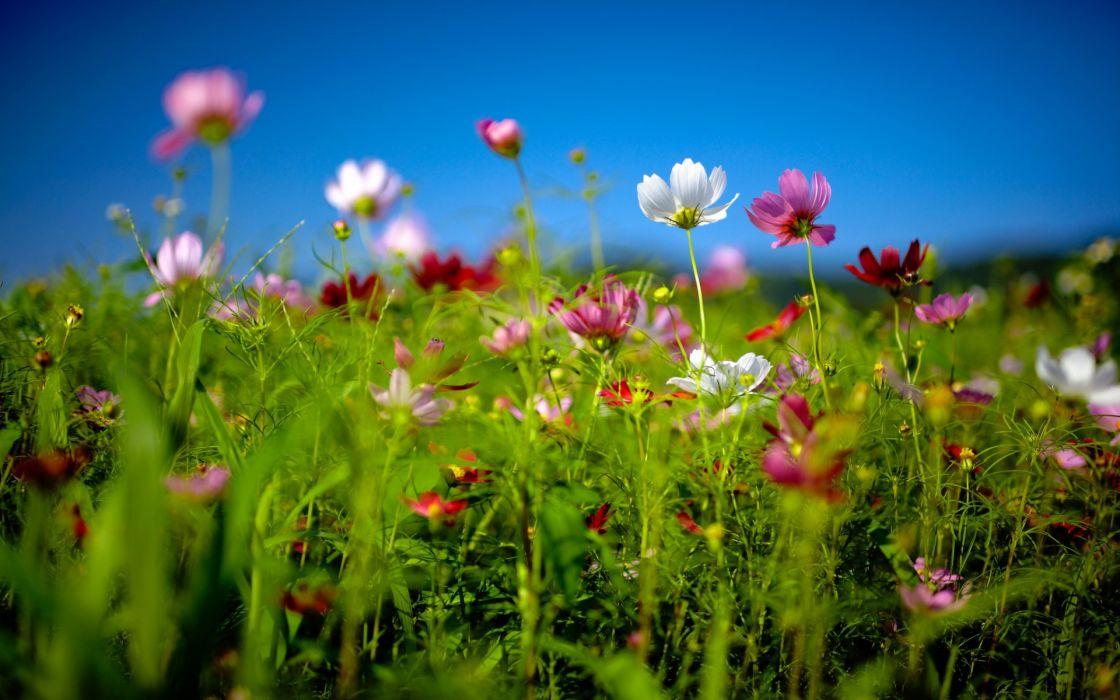 nature flowers petals fields macro wallpaper