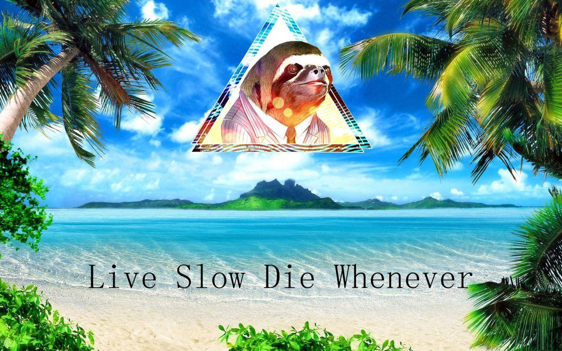 Humor funny sloth islands ocean sea tropical palm trees ...