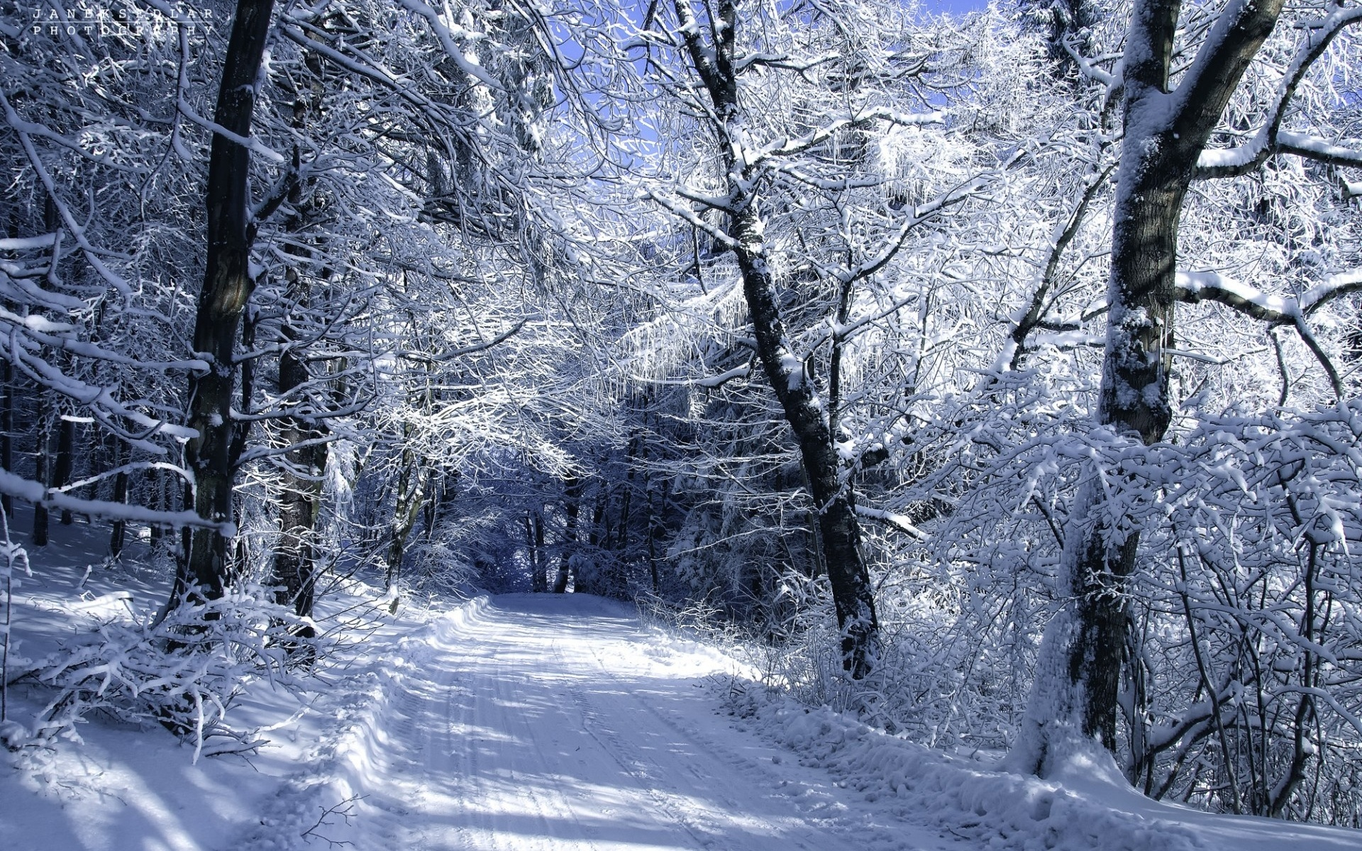 winter forest trees snow - photo #11
