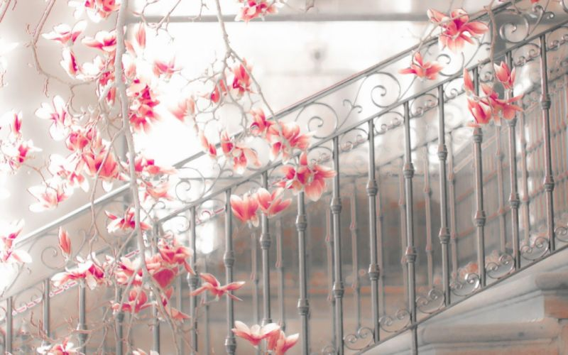 magnolia steps flowers blossoms mood stairs architecture wallpaper