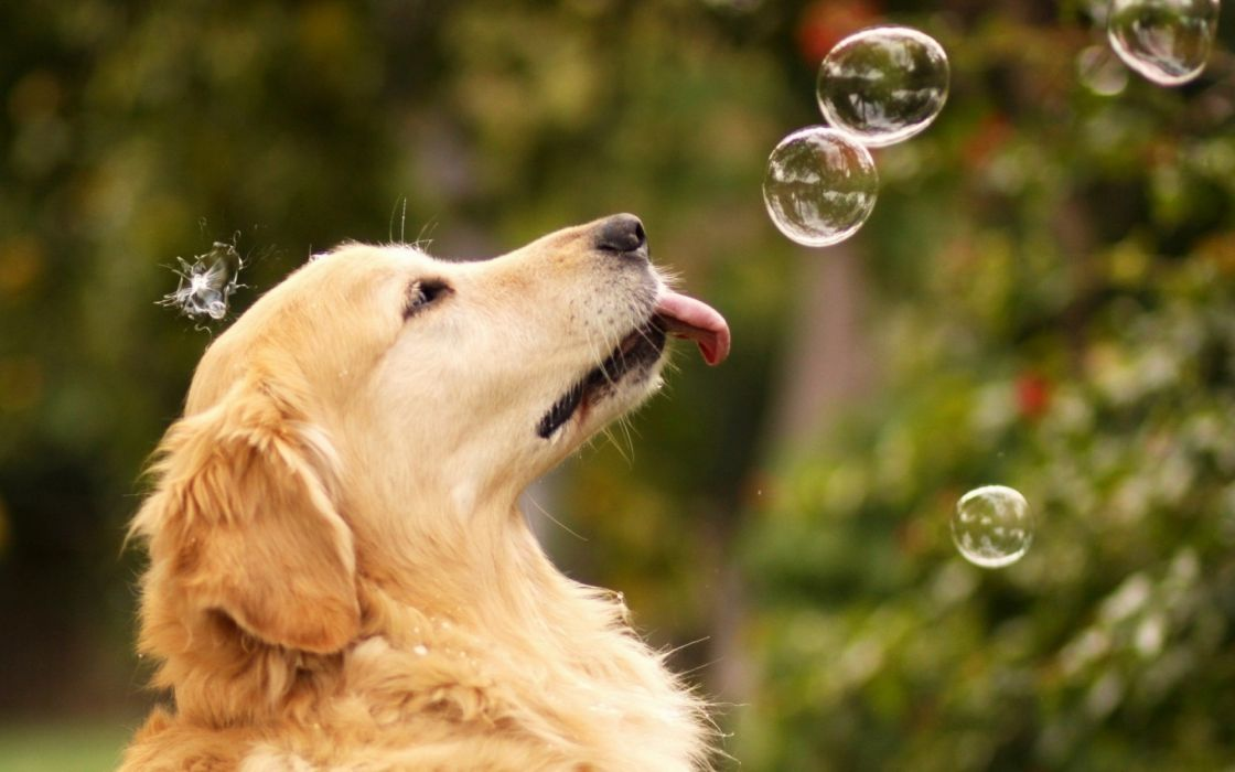 bubbles rainbow humor funny animals dogs canines wallpaper