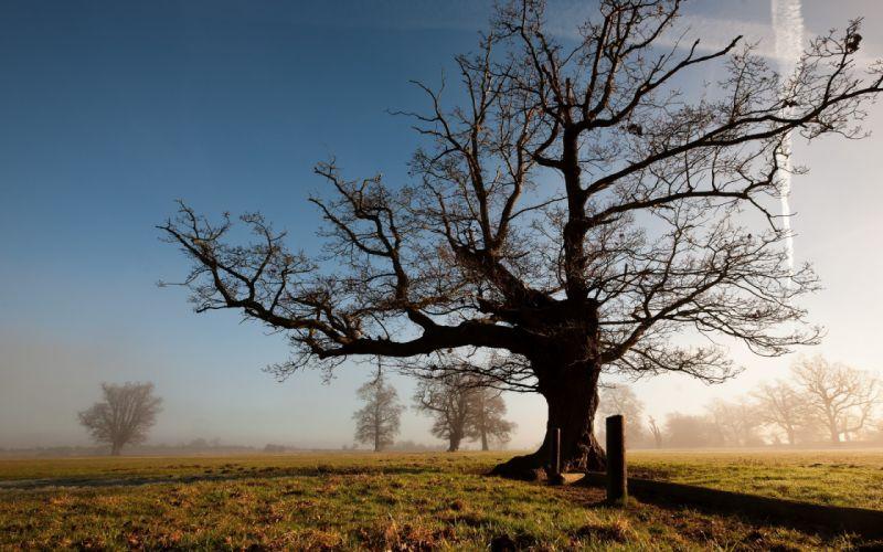sky trees nature landscapes fog sunsrise sunset wallpaper