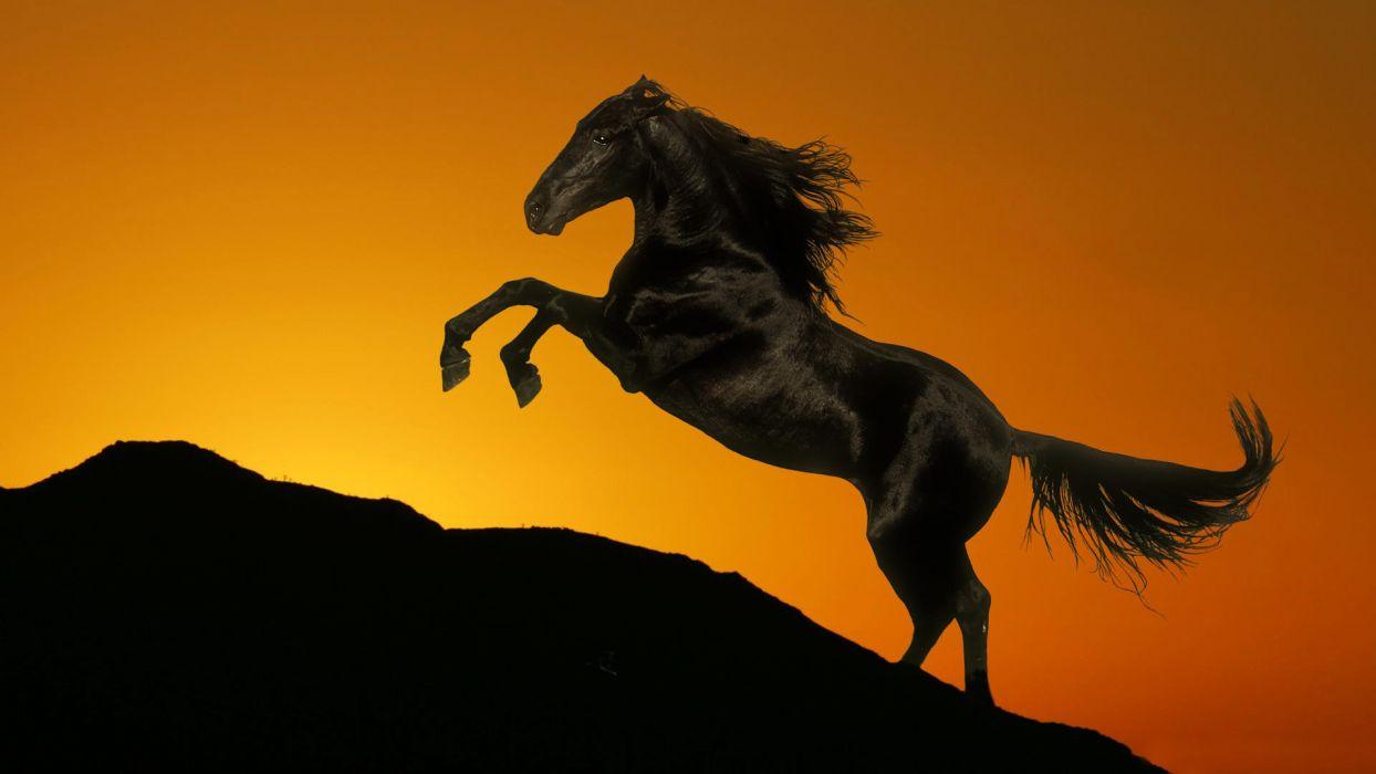 silhouette horses sunrise sunset sky wallpaper
