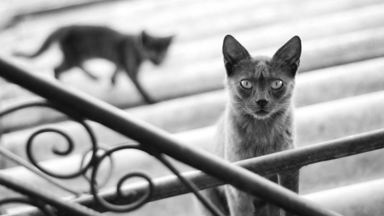 black white cat kittens wallpaper