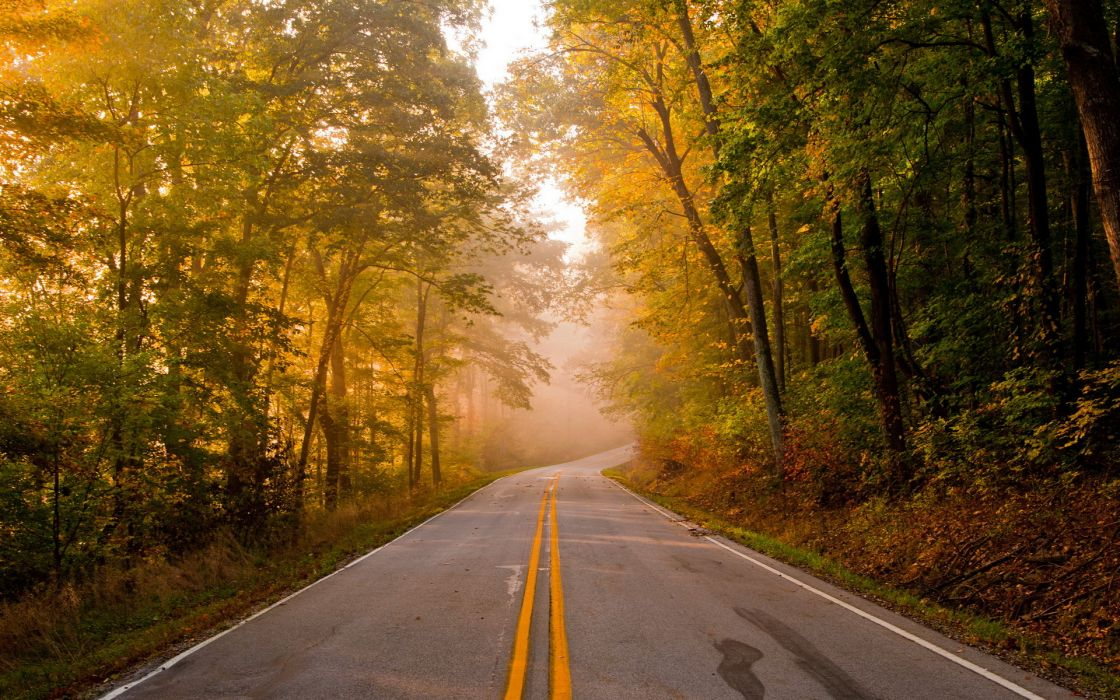 roads trees forest autumn fall wallpaper