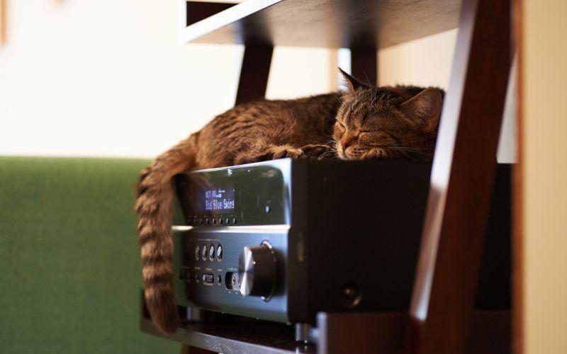 cats sleep wallpaper