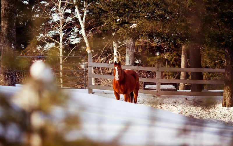 horse fence winter wallpaper