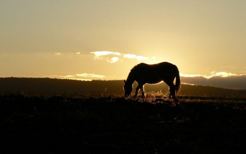 horses sunrise sunset wallpaper