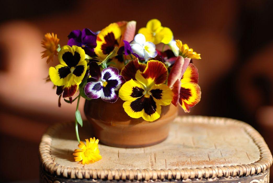 flowers still life macro color wallpaper