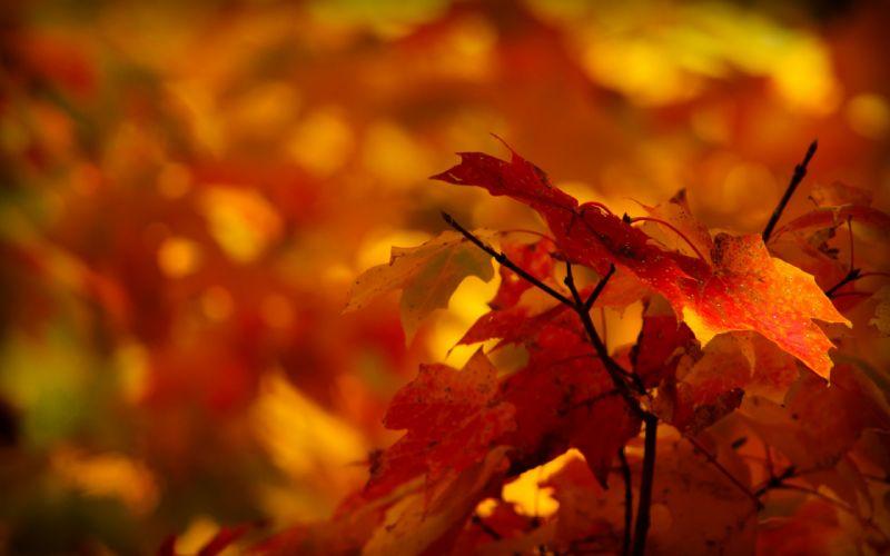 leaves trees autumn macro wallpaper