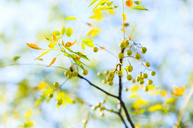 macro trees leaves autumn wallpaper