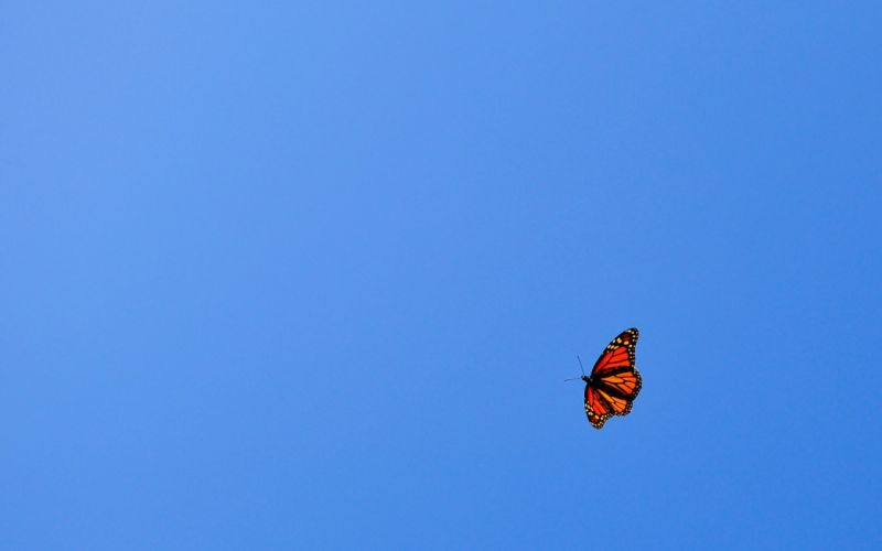 butterfly sky blue wallpaper