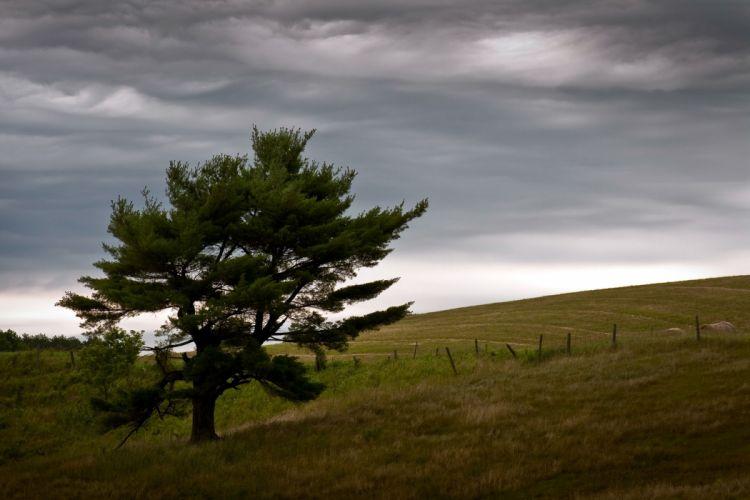 field tree landscape sky wallpaper