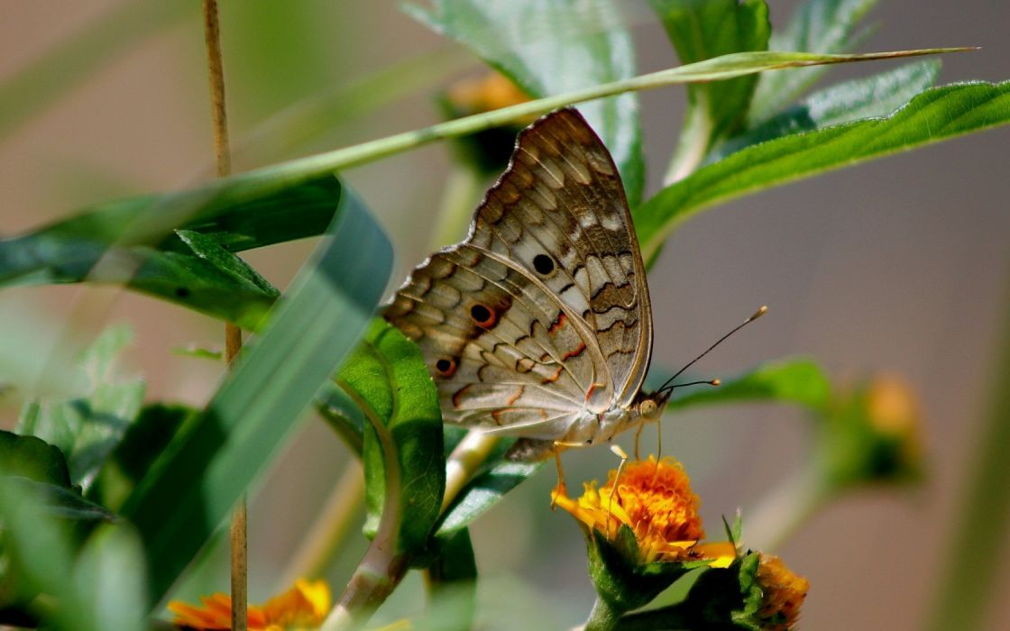 flower butterfly foliage macro wallpaper