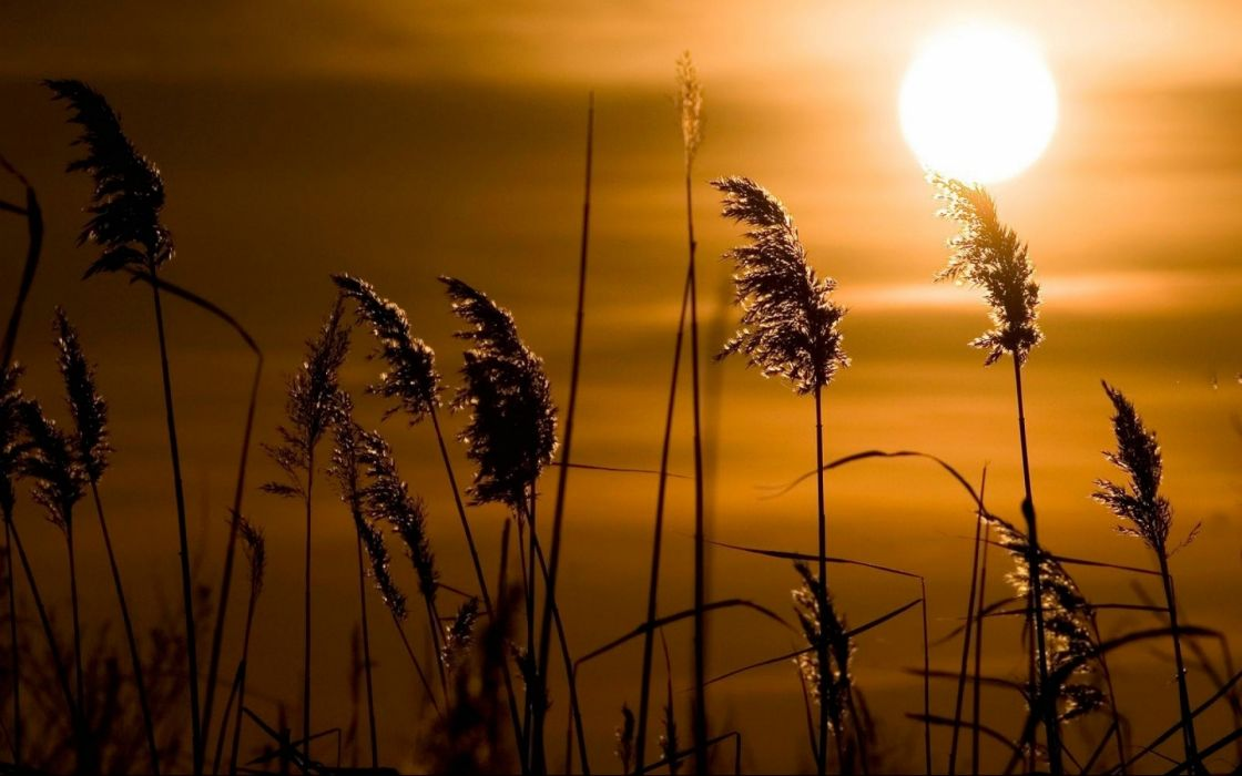 grass sunset wallpaper