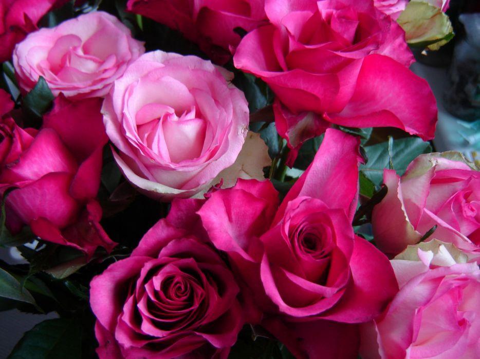 Roses Flowers wallpaper