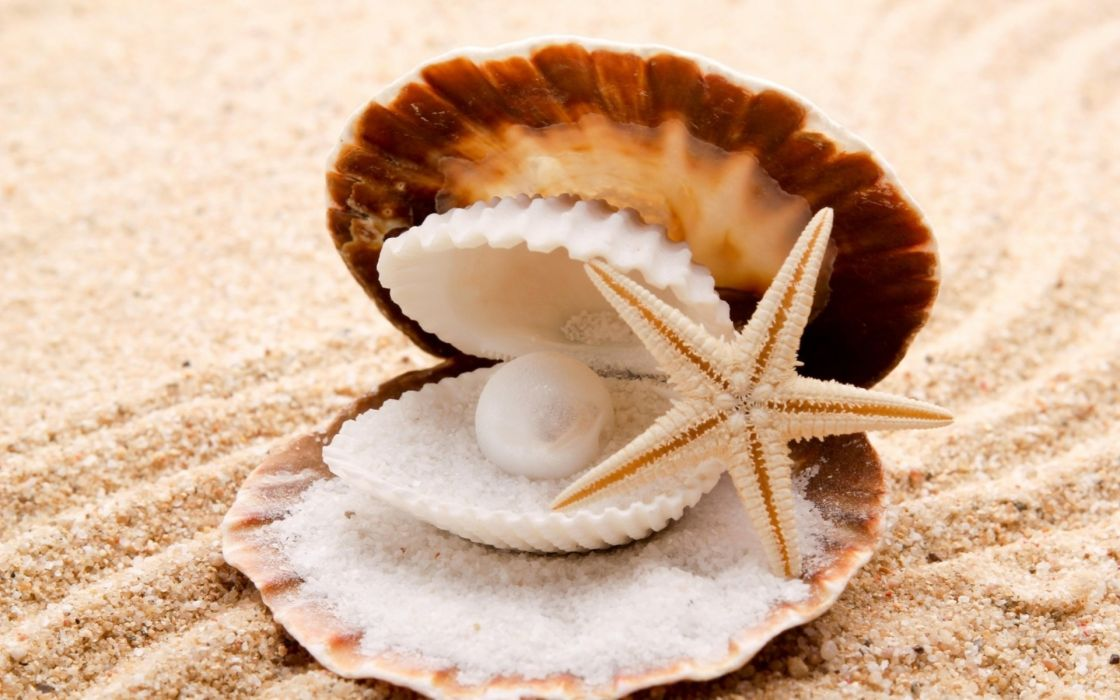 Seashells Starfish Pearl Sand Beaches Shell Clam Wallpaper