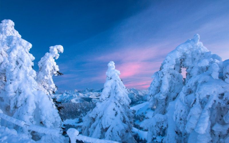 snow spruce winter bare trees mountains sky sunset wallpaper