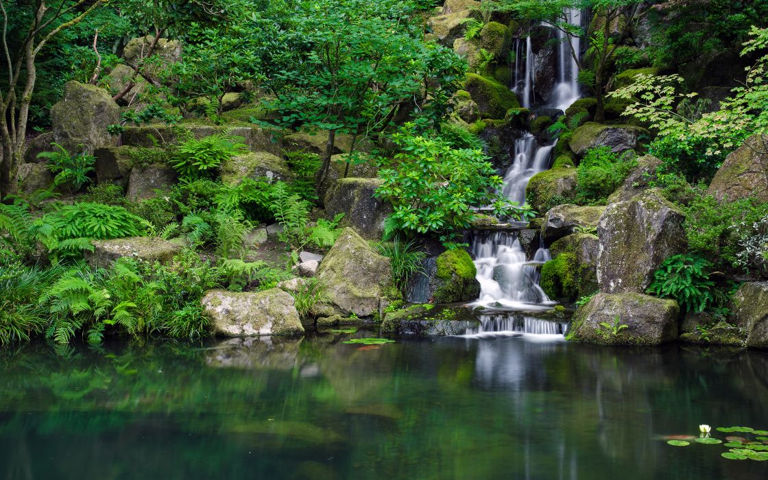 Waterfall Jungle Forest Pond trees reflection wallpaper