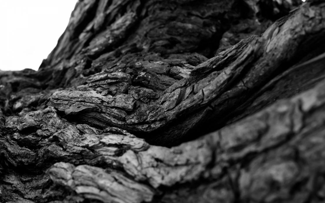 Tree Bark Macro BW black white wallpaper