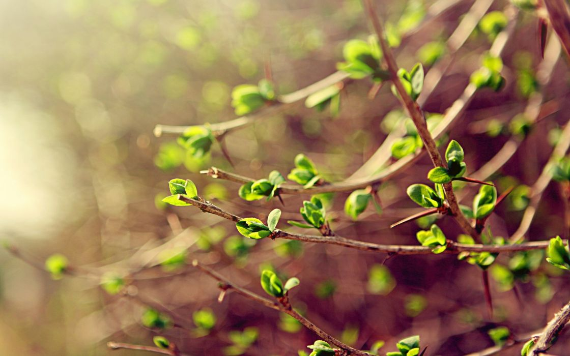spring leaves branches green macro spring wallpaper