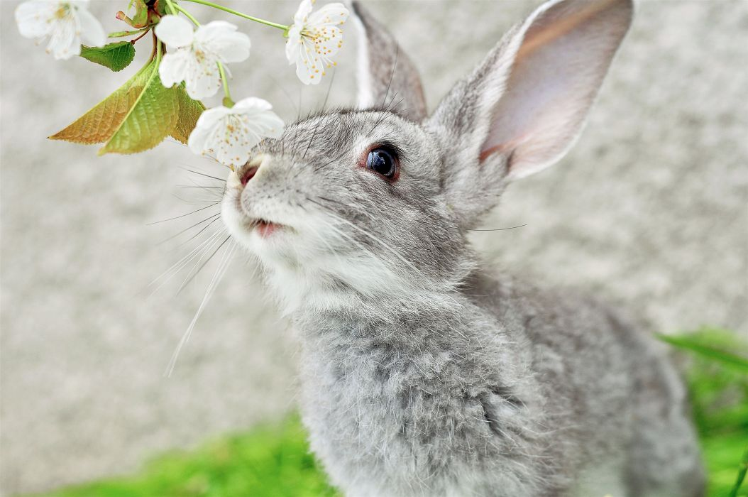 blossoms flowers rabbits easter bunny wallpaper