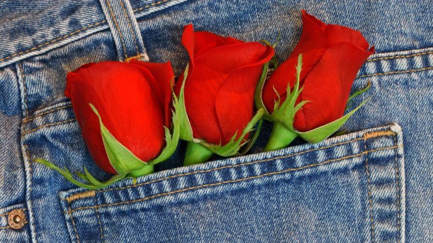 bouquet roses jeans wallpaper