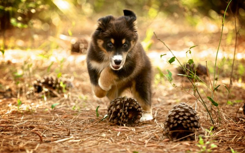 dog puppy nature wallpaper