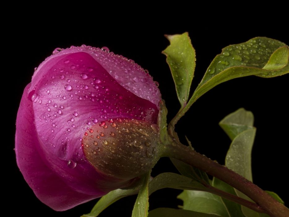close-up drops flowers leaves water wallpaper