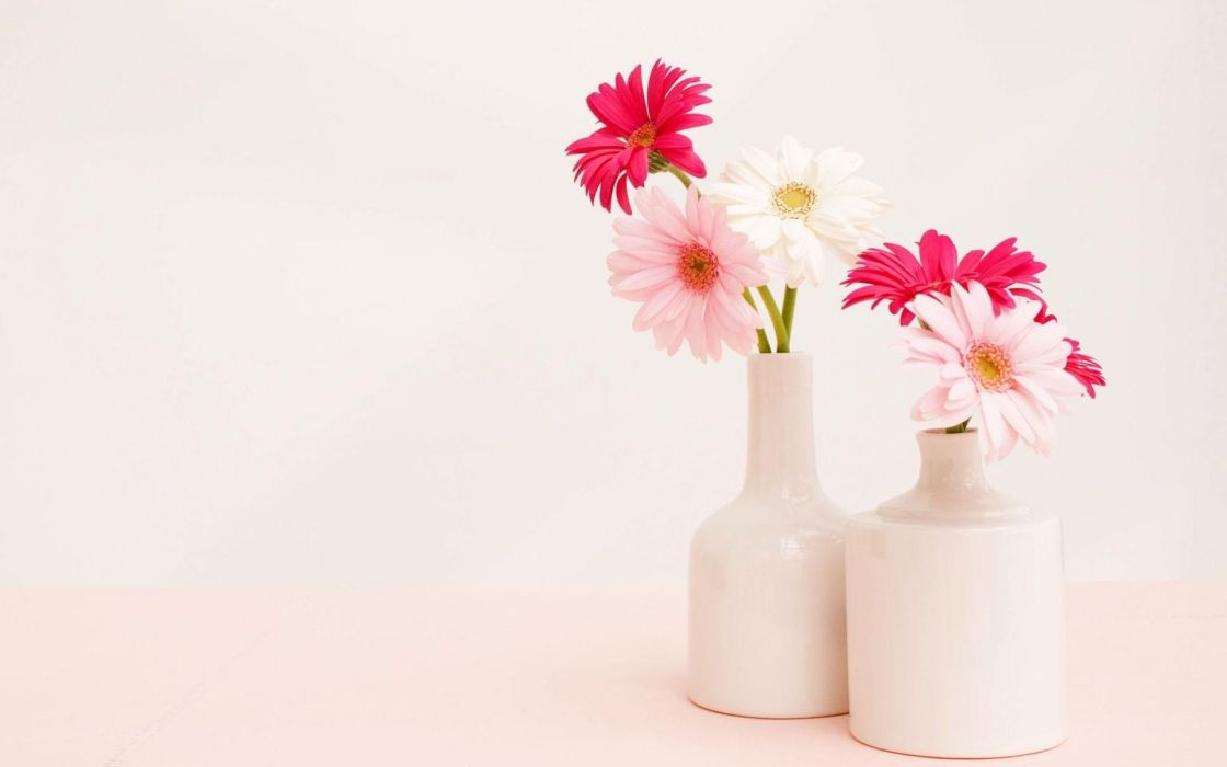 Gerbera flower vase white light still life wallpaper