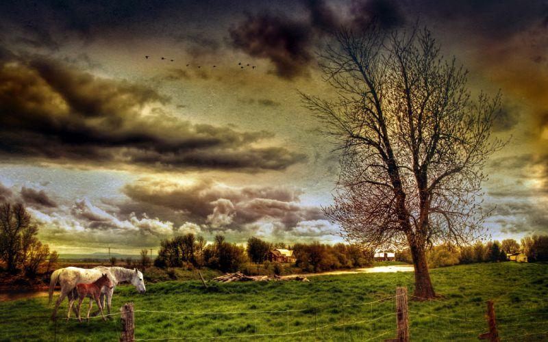 field horses landscape style wallpaper