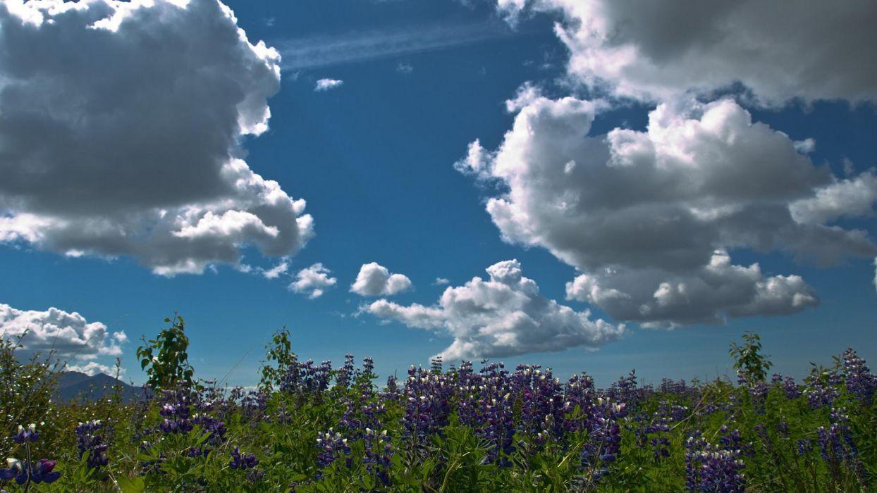 fields flowers clouds sky wallpaper