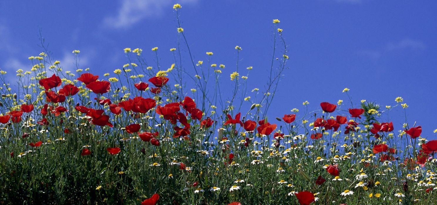 flowers sky wallpaper