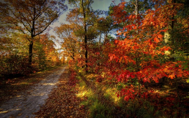 forest road nature sky autumn trees landscape wallpaper