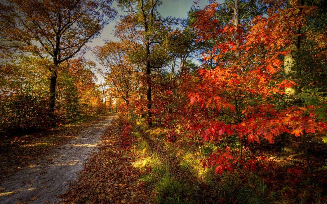 forest  road  nature  sky  autumn  trees  landscape wallpaper