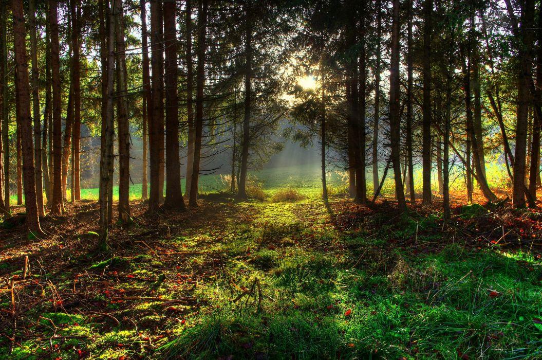 Forests Trees Grass Nature sunlight wallpaper