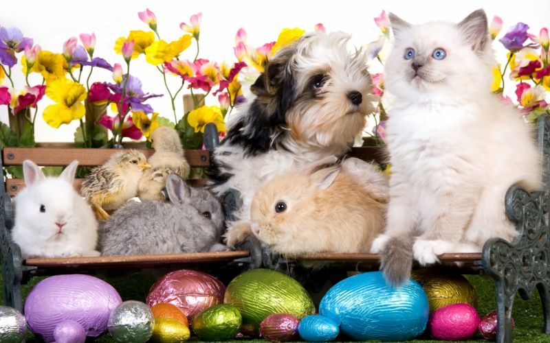 kitten dog puppy rabbits chickens eggs flowers easter wallpaper